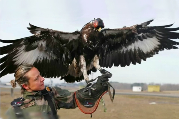 french-eagle-military